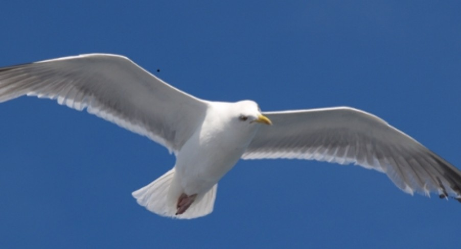 Featured Image The Seagull Who Attacked Chris Brown