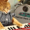Previous Post Keyboard Cat is back!
